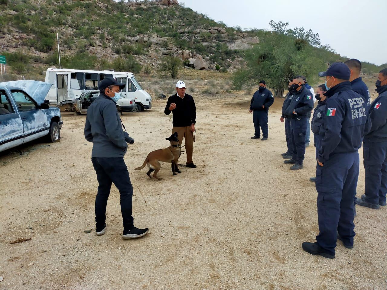 Certifican a perritos de PESP Sonora